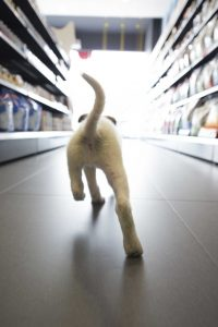 חנות חיות מקומית
